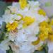 Floraria Craiova