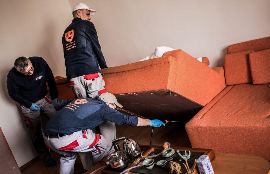 servicii dezinsectie in Bucuresti